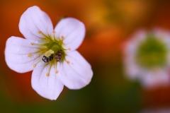 Insekten-Besuch